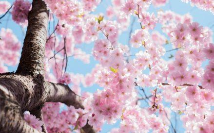 《4月の企画のお知らせ 春の親睦会》