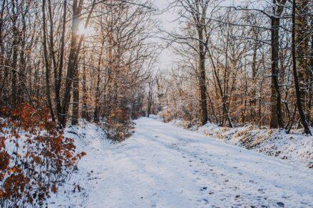 《 2月14日:Pfannenstiel散策 》