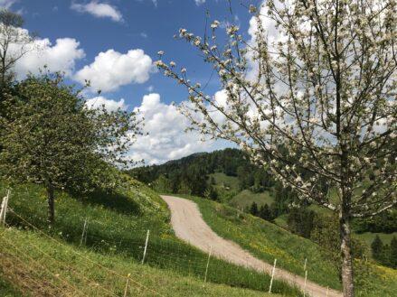 《 5月23日:Hörnliへのハイキング 》